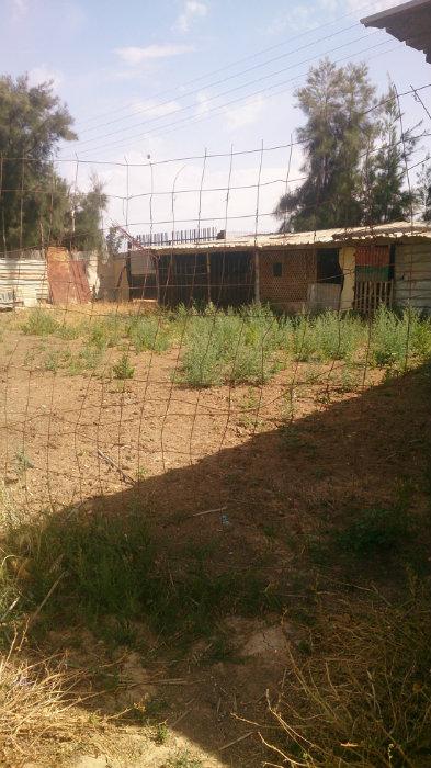 قطعة أرض حضارية محادية للمركز الجامعي برمادية غليزان
