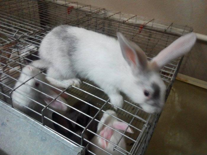 ارانب