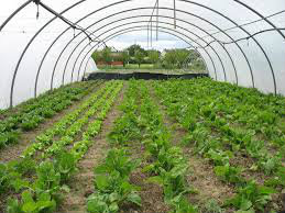 Serres agricole