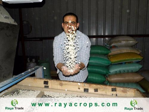 الفاصوليا البيضاءالمصرية Egyptian White Kidney Dry Beans
