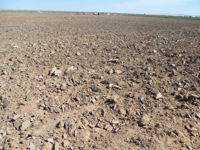 أراضي  فلاحية  بولاية  الجلفة