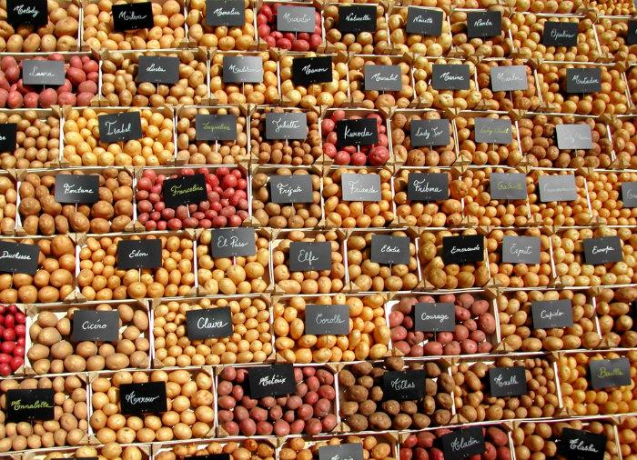 Achat et vente des graine ordinaire