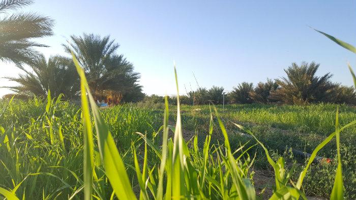 vente d'un terrain agricole