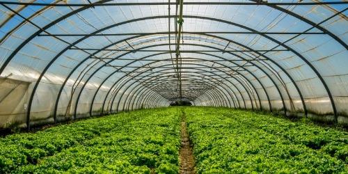 serres agricole&broyeur d'aliment