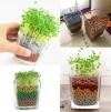 Ecoey Mini Pot de plantes aquatiques
