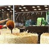 Huil pour bétail زيت لاغذية الانعام